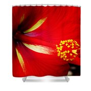 Tropical Hibiscus - Starry Wind 04a Shower Curtain