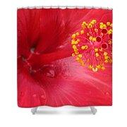 Tropical Hibiscus - Trinidad Wind 02 Shower Curtain
