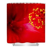 Tropical Hibiscus - Trinidad Wind 02a Shower Curtain