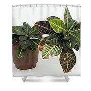Tropical Houseplant Shower Curtain