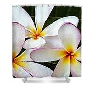 Tropical Maui Plumeria Shower Curtain