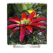 Tropical Plant Colors Shower Curtain