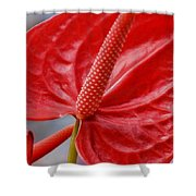 Tropical Red Anthurium Shower Curtain