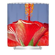 Tropical Red Hibiscus Flower Against Blue Sky  Shower Curtain