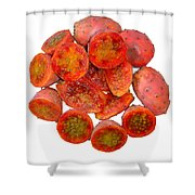 Tropical Red Prickly Pear Fruit  Shower Curtain