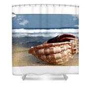 Tropical Shell 2 Shower Curtain