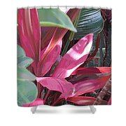 Tropical Spice Shower Curtain