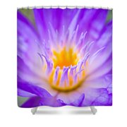 Tropical Waterlily Glow Shower Curtain