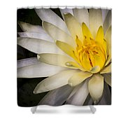 Tropical White Water Lily Shower Curtain