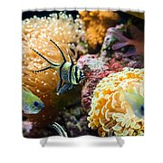 Tropical Wonderland - Banggai Cardinalfish Shower Curtain