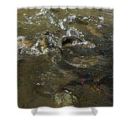 Trout Feeding Surface Rainbow Trout Art Prints Shower Curtain