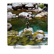 Trout Fly Fishing Shower Curtain