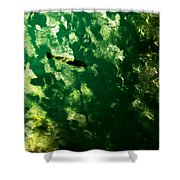 Trout In Emerald Shower Curtain