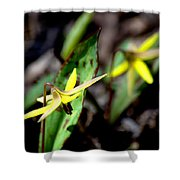 Trout Lilies Shower Curtain