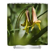Trout Lily Flowers Shower Curtain