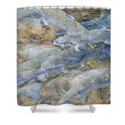 Trout Pond Abstract Shower Curtain