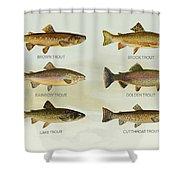 Trout Species Shower Curtain