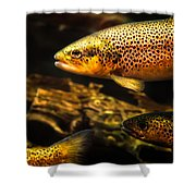 Trout Swiming In A River Shower Curtain