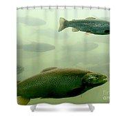 Trout Underwater Shower Curtain