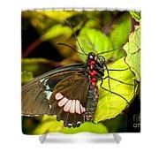 True Cattleheart Butterfly Shower Curtain