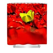 True Color Panorama Shower Curtain