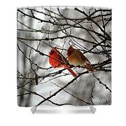 True Love Cardinal Shower Curtain