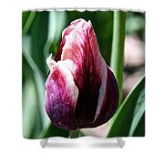 Truly Tulip Shower Curtain
