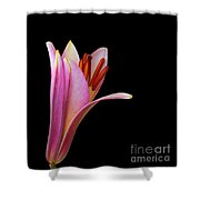 Trumpet Lily Shower Curtain