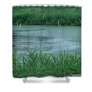 Trumpeter Swan Family Shower Curtain