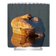 Trumpeter Swan On Swan Lake Shower Curtain