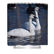 Trumpeter Swan Pair Shower Curtain