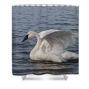 Trumpeter Swan - Profile Shower Curtain