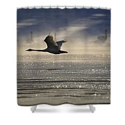 Trumpeter Swan Silhouetted In Flight Shower Curtain