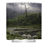 Trumpeter Swans At Sunrise Shower Curtain