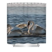Trumpeter Swans Playing Tag Shower Curtain