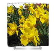 Trumpeters Of Spring Shower Curtain