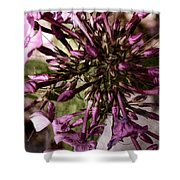 Trumpets Of Phlox Shower Curtain