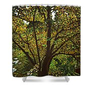 Trunk Of Life Shower Curtain