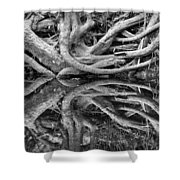 Trunks On The River Bank Shower Curtain