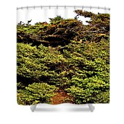 Tuckamore At Green Point Coastal In Gros Morne Np-nl Shower Curtain