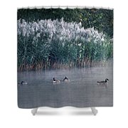 Tucked Away Shower Curtain by Skip Willits