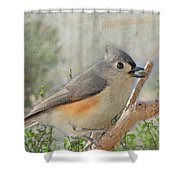 Tuffted Titmouse Early Spring Shower Curtain