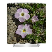Tufted Phlox Shower Curtain