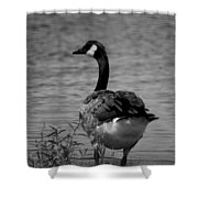 Tufted Tail Feathers Shower Curtain