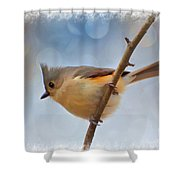 Tufted Titmouse - Digital Paint II With Frame Shower Curtain