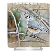 Tufted Titmouse - Baeolophus Bicolor Shower Curtain