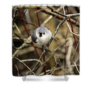 Tufted Titmouse On The Watch Shower Curtain