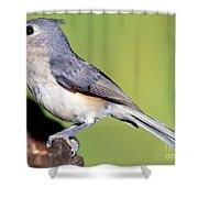 Tufted Titmouse Parus Bicolor Shower Curtain