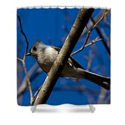 Tufted Titmouse Shower Curtain