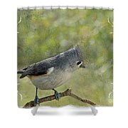 Tufted Titmouse With Decorations II Shower Curtain